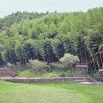 Click For Larger Image - Bamboo Forest